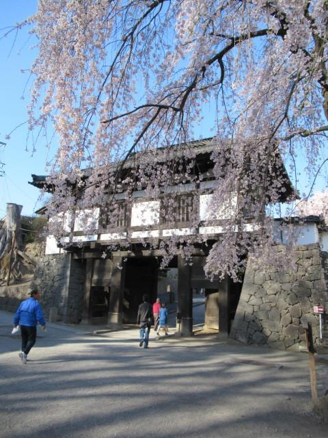 小諸城址・懐古園 * 桜が満開でした~軽井沢の桜も開花しました♪_f0236260_03105818.jpg