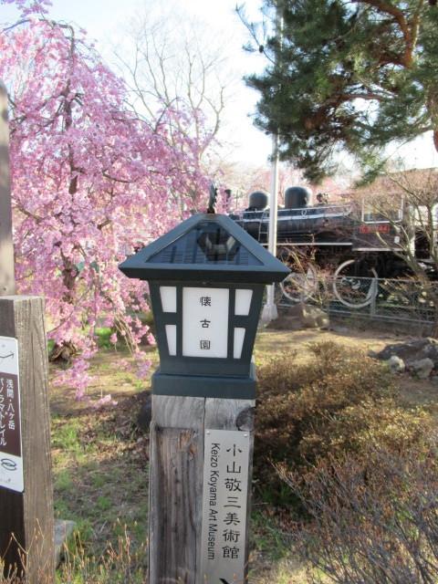 小諸城址・懐古園 * 桜が満開でした~軽井沢の桜も開花しました♪_f0236260_03141601.jpg