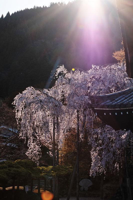 桜 2019_f0021869_23023831.jpg