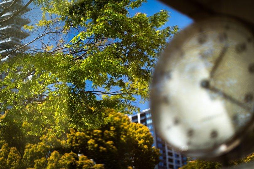 桜の季節を見送る光蜥蜴_d0353489_16415650.jpg