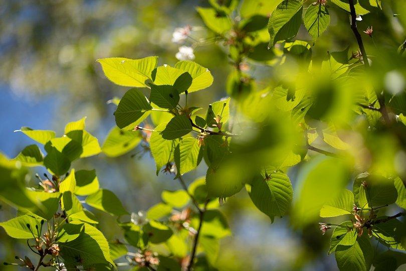 桜の季節を見送る光蜥蜴_d0353489_16424077.jpg