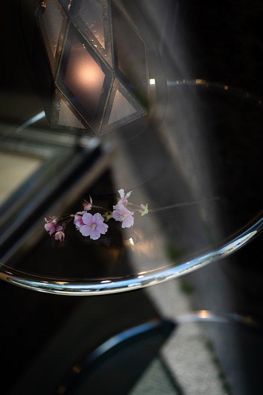 桜の季節を見送る光蜥蜴_d0353489_16524090.jpg