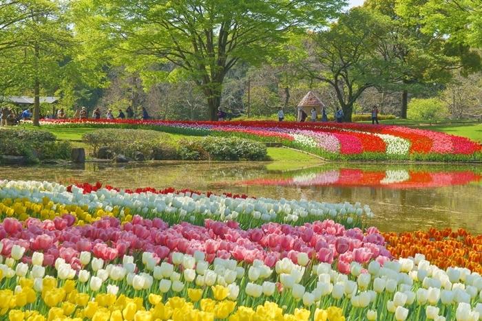 昭和記念公園 チューリップ 2018_b0145398_23040124.jpg