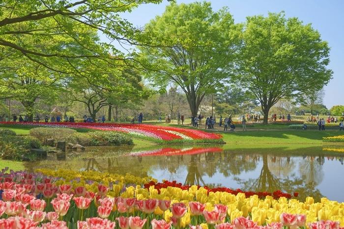 昭和記念公園 チューリップ 2018_b0145398_23070536.jpg