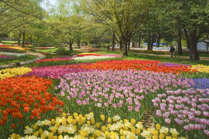 昭和記念公園 チューリップ 2018_b0145398_23150463.jpg