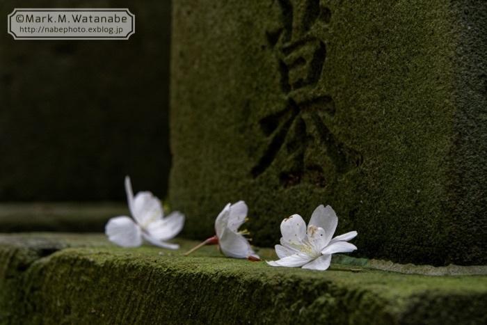 桜山神社_e0135098_01302617.jpg