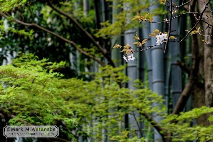 桜山神社_e0135098_01310278.jpg