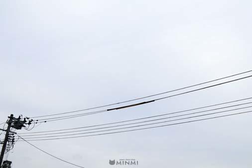 曇り空の日曜日(^^)_c0140599_11395347.jpg