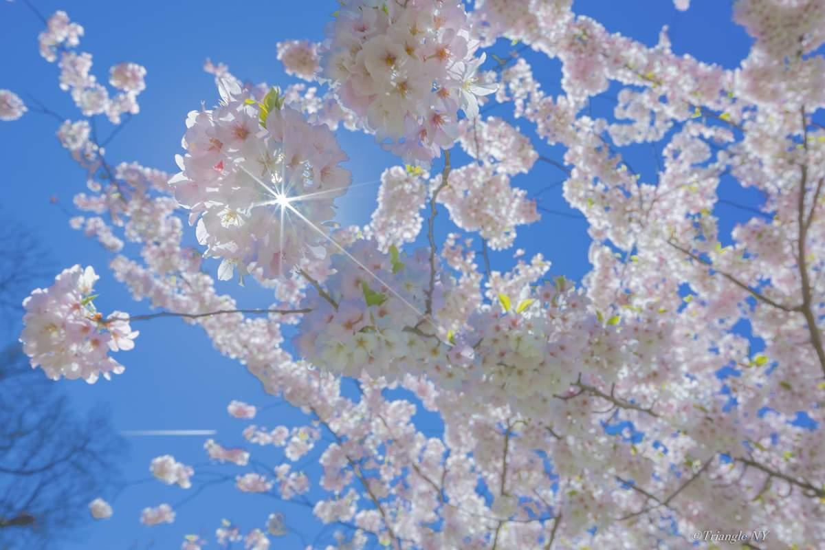 Spring New York 2019 ー900作品達成記念⑤ー_a0274805_19132172.jpg