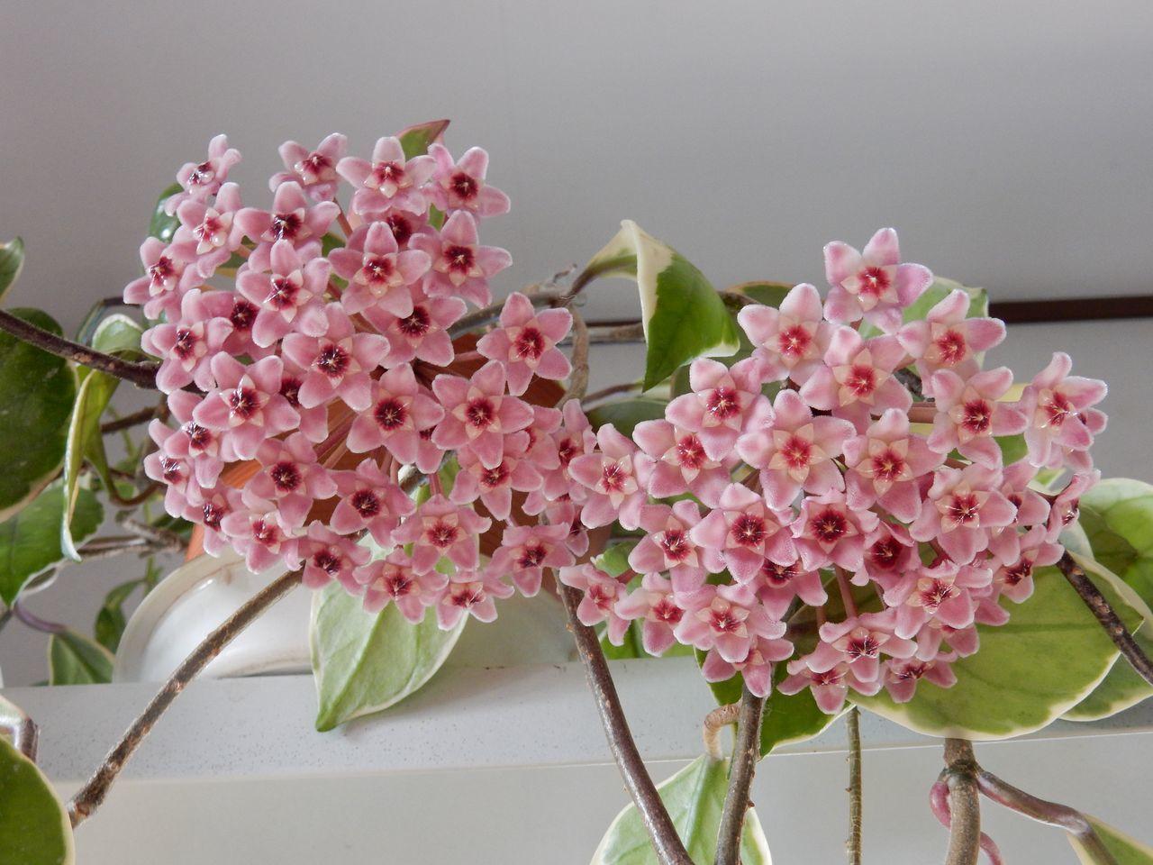 春ですね_c0025115_22320242.jpg
