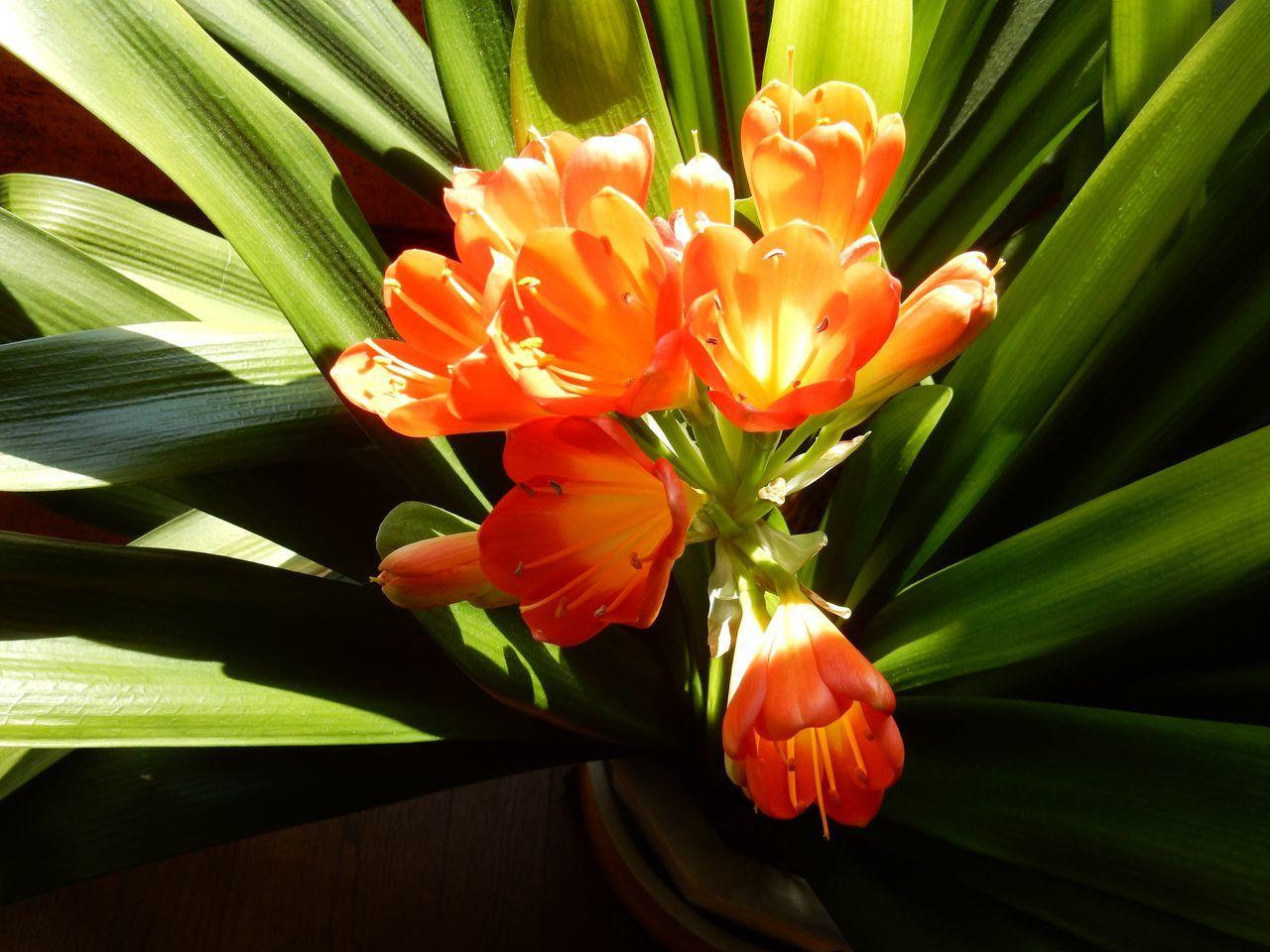 春ですね_c0025115_22322593.jpg