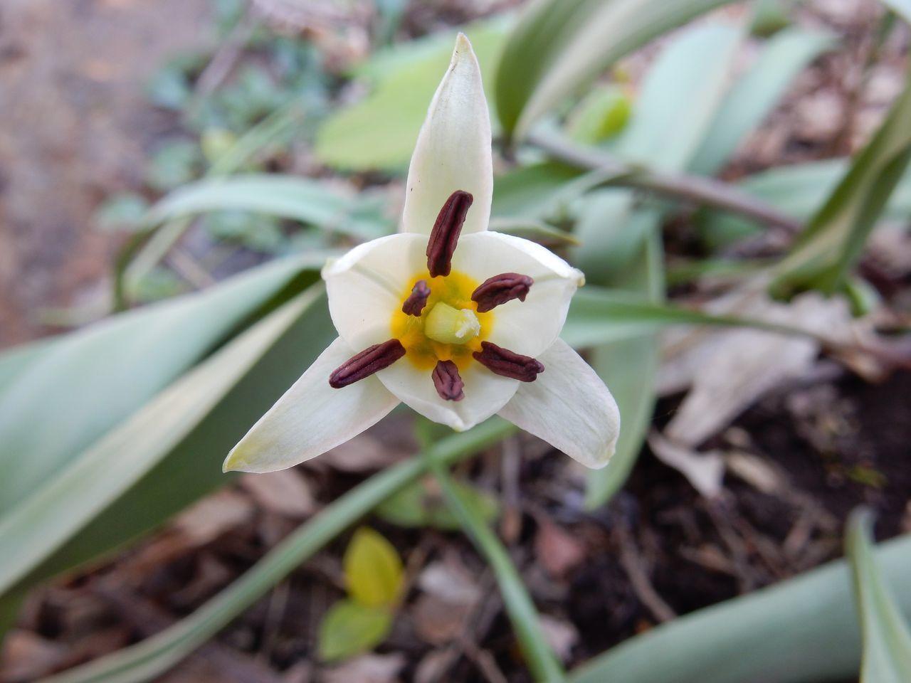 春ですね_c0025115_22330192.jpg