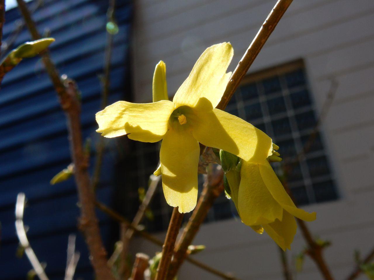 春ですね_c0025115_22331866.jpg