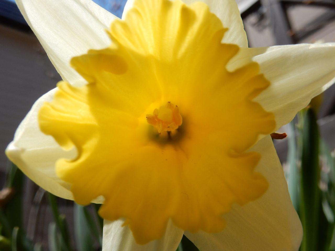 春ですね_c0025115_22332577.jpg