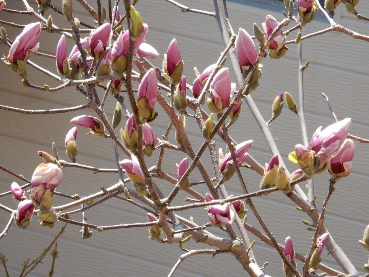 春ですね_c0025115_22333881.jpg