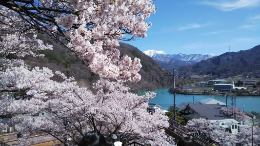 天下第一の桜 高遠さくら_a0142317_14503416.jpg