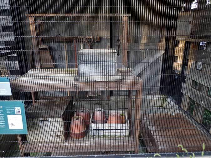 メンフクロウとアオダイショウ(井の頭自然文化園 August 2018)_b0355317_22173496.jpg