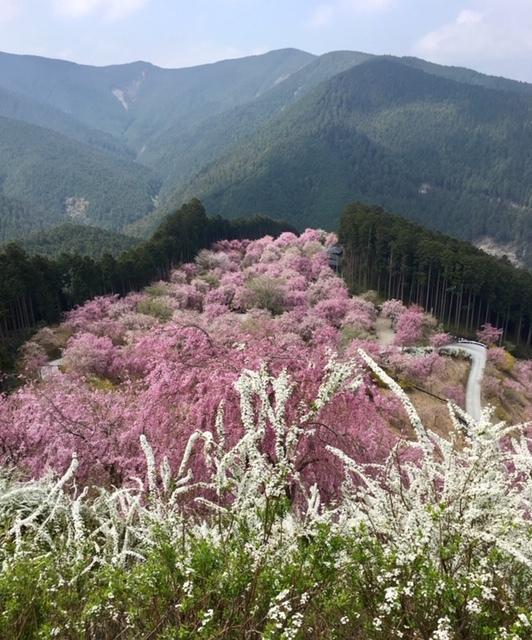 枝垂れ桜_a0112220_16424024.jpg