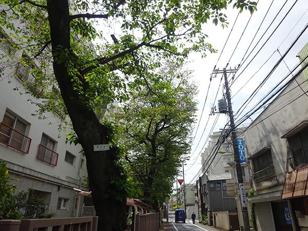 八重桜を見に・・・_f0097523_15304318.jpg