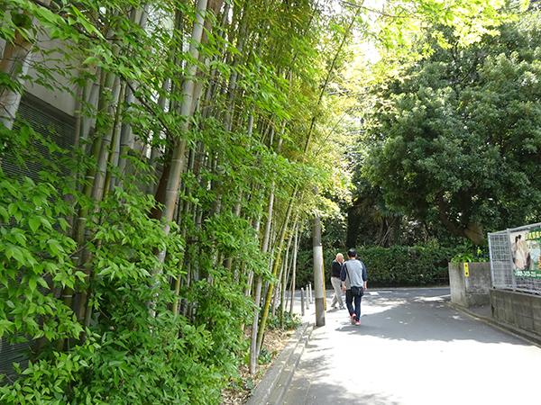八重桜を見に・・・_f0097523_15310312.jpg
