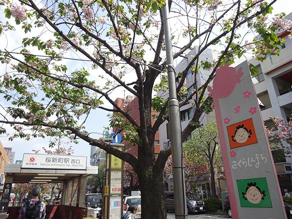 八重桜を見に・・・_f0097523_15311321.jpg