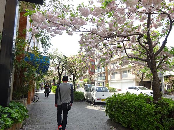 八重桜を見に・・・_f0097523_15312090.jpg