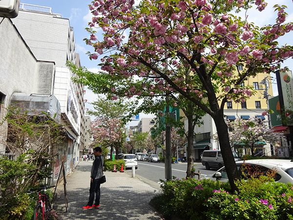 八重桜を見に・・・_f0097523_15312210.jpg