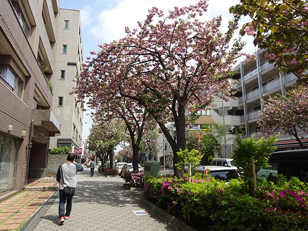 八重桜を見に・・・_f0097523_15313027.jpg
