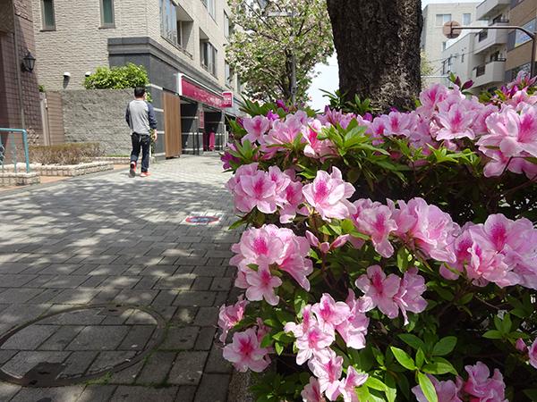 八重桜を見に・・・_f0097523_15313752.jpg