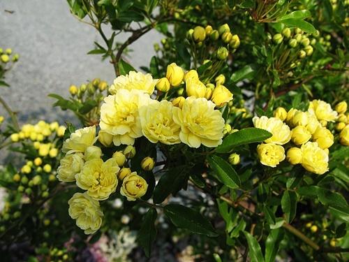 春爛漫! いや 初夏?_f0129726_18581994.jpg