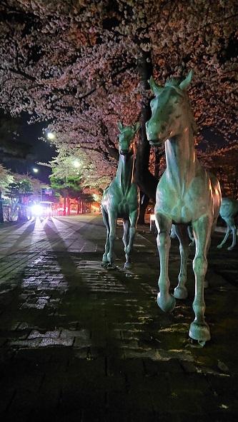 官庁街のさぐら 十和田市_c0299631_23531473.jpg