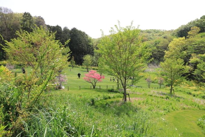 【里山ガーデンフェスタ】バードショー_f0348831_22324940.jpg