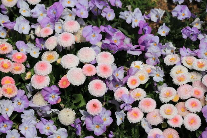 【里山ガーデンフェスタ】バードショー_f0348831_22324958.jpg