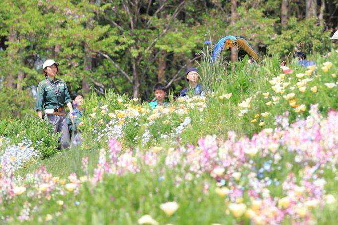【里山ガーデンフェスタ】バードショー_f0348831_22331082.jpg