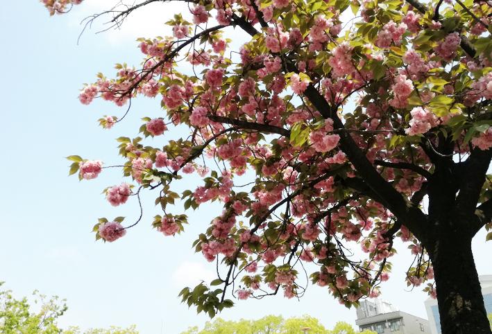 春のアウトドアランチ_d0351435_09005496.jpg