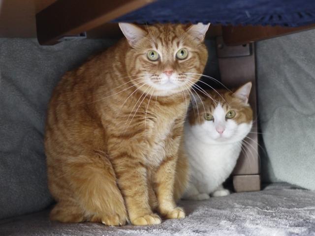 猫のお留守番 あずきくんきなこくん編。_a0143140_22571659.jpg