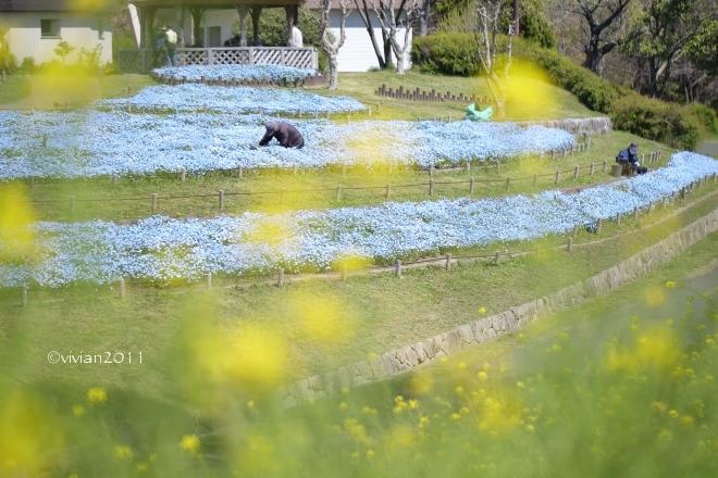 大阪 花盛りの公園で撮影会 in 花博記念公園 鶴見緑地_e0227942_21464800.jpg