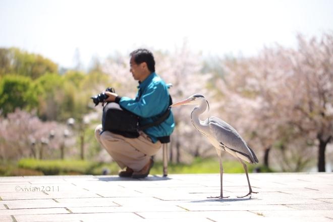 大阪 花盛りの公園で撮影会 in 花博記念公園 鶴見緑地_e0227942_21495248.jpg