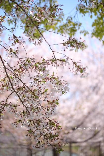 大阪 花盛りの公園で撮影会 in 花博記念公園 鶴見緑地_e0227942_21533647.jpg