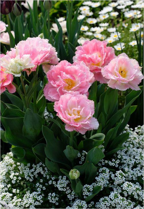 今朝の庭の花_a0256349_10312049.jpg