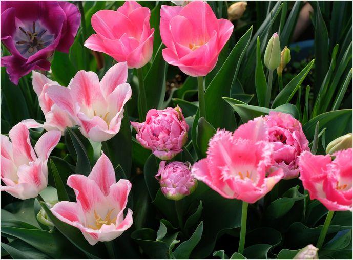今朝の庭の花_a0256349_10313057.jpg