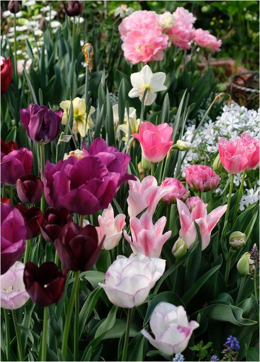 今朝の庭の花_a0256349_10314231.jpg