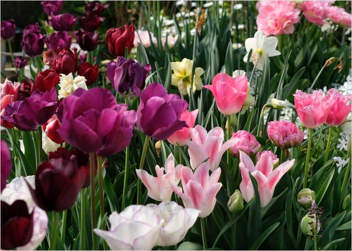 今朝の庭の花_a0256349_10315679.jpg