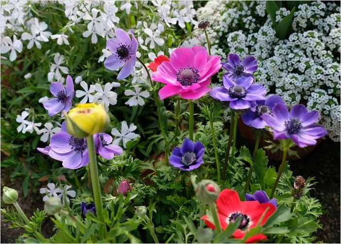 今朝の庭の花_a0256349_1032825.jpg