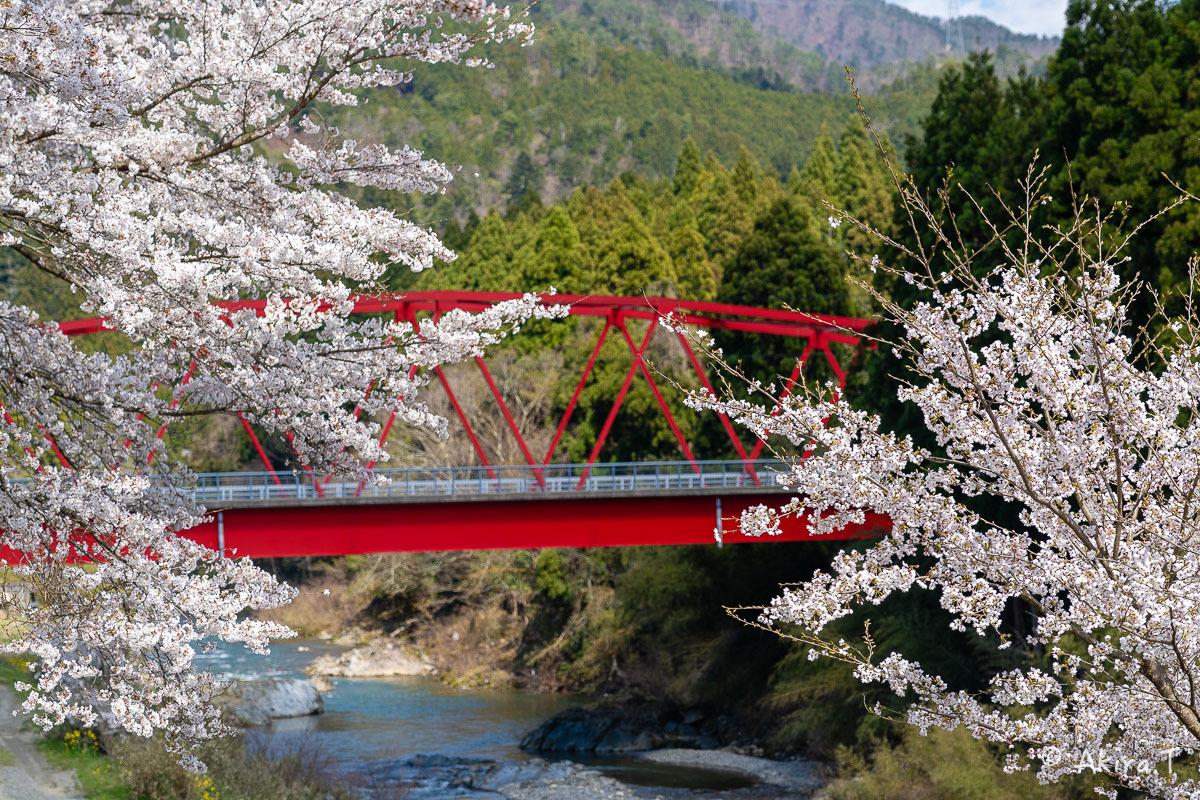 京都の桜 2019 〜8〜_f0152550_22590290.jpg