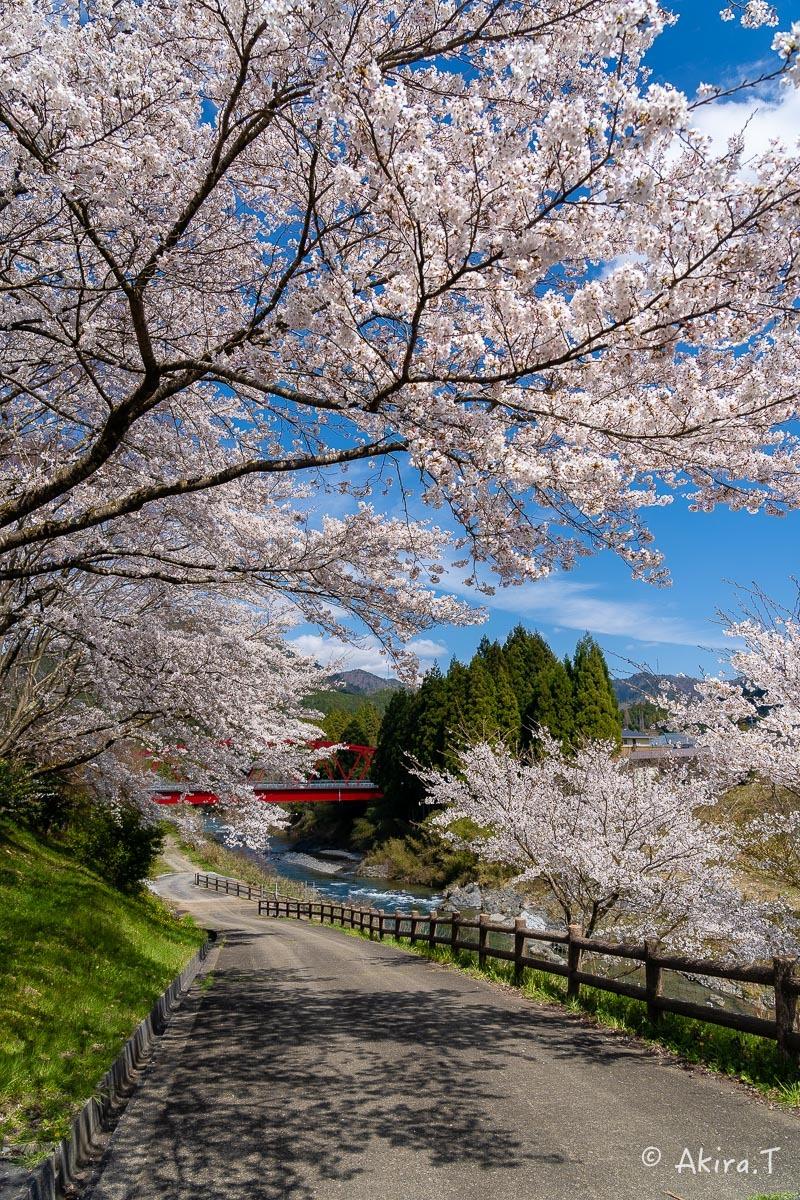 京都の桜 2019 〜8〜_f0152550_22591006.jpg