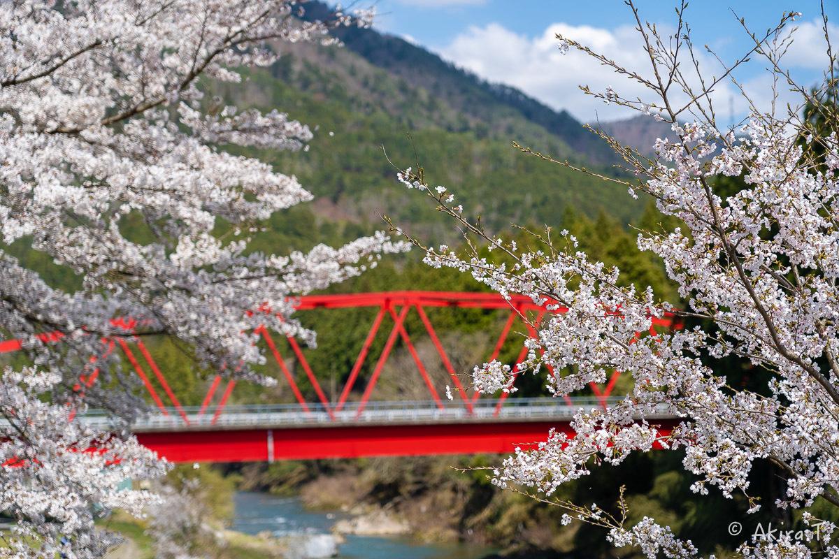 京都の桜 2019 〜8〜_f0152550_22592530.jpg