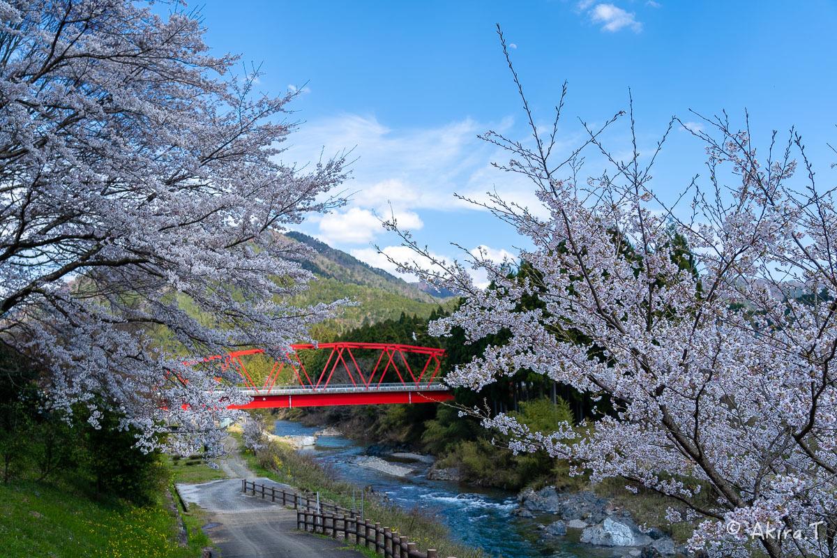 京都の桜 2019 〜8〜_f0152550_22593396.jpg