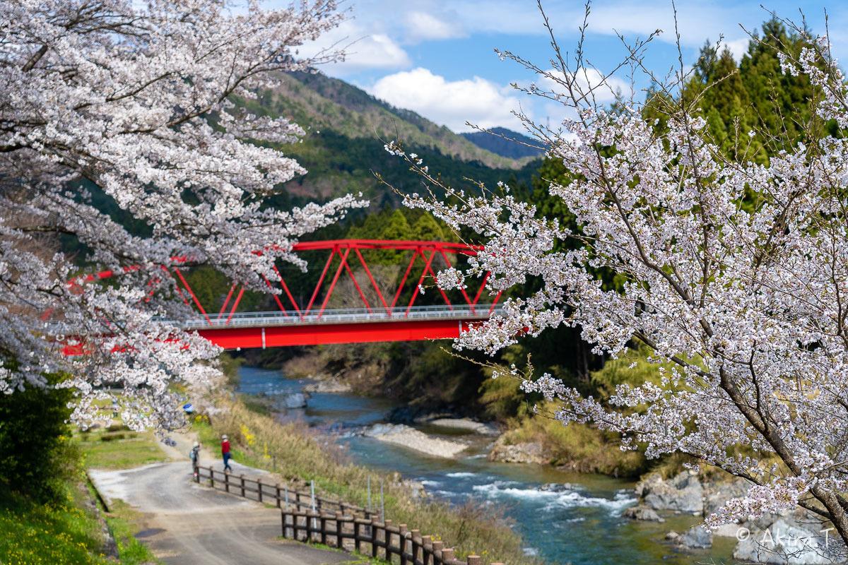 京都の桜 2019 〜8〜_f0152550_22594210.jpg