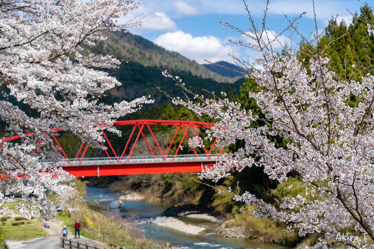 京都の桜 2019 〜8〜_f0152550_22595271.jpg